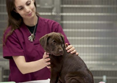 Veterinary Testing
